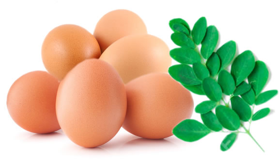 œufs et feuilles de moringa