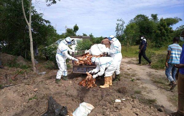 Foyer de grippe aviaire dans le canton de Djagblé au TOGO