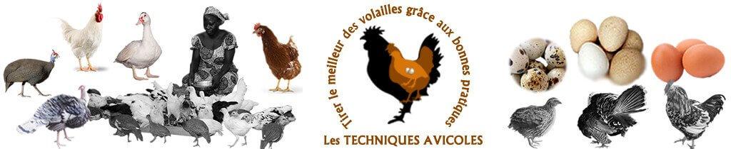 Les Techniques pour l'élevage des volailles – Aviculture